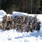20 Dead Maine Coyotes