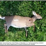 $3,000 Reward For Information About Idiot Poachers