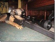 dogsniper1