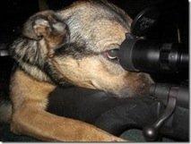 dogsniper2