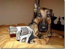 dogsniper3
