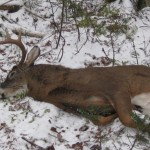 Maine Buck Bagged in Rangeley Area