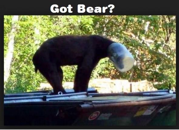 gotbear