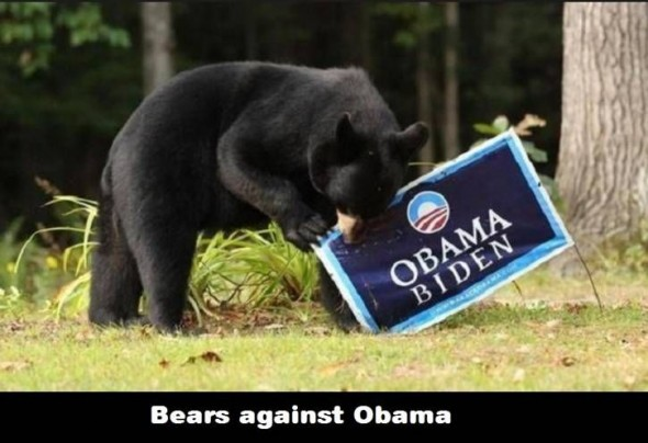 bearsagainstobama