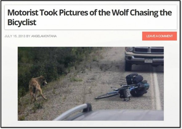 wolfchasebicycle