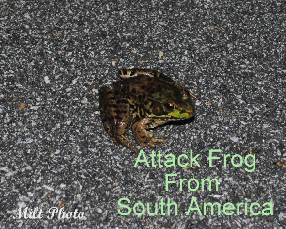 attackfrog