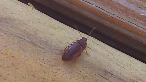 deckbug