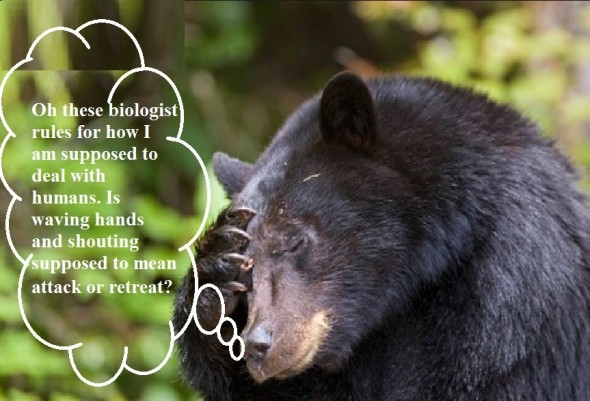 bearbehavior
