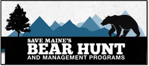 savemainesbearhunt