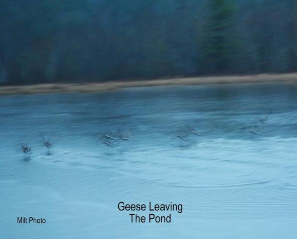 geeseleavingpond