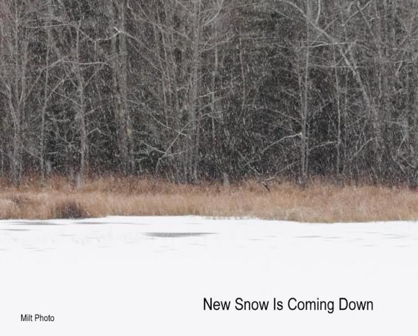 snowcomingdown