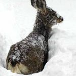 Media Mantra Says Maine's Deer Harvest Has Increase