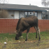 neighbormoose