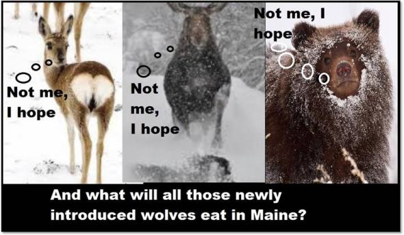 wolffood