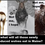 Does Maine Want Wolves?