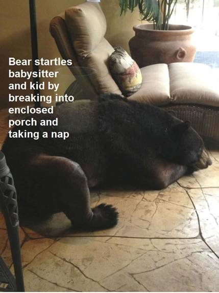 BearParadigm
