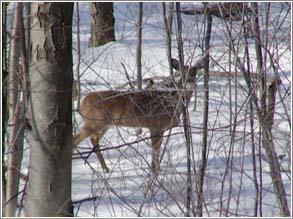 deerwinteryard