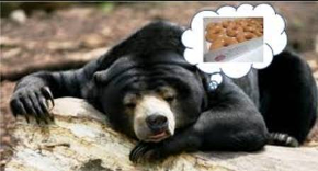BearDreamingofDonuts