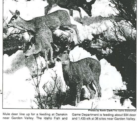 DeerPhoto1