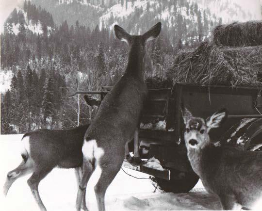 DeerPhoto2