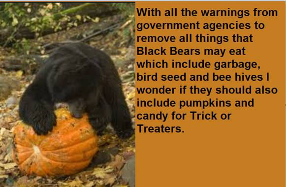 PumpkinWarning