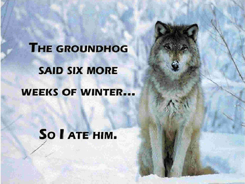 WolfEatsGroundhog