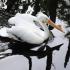 Milt's Corner – White Pelican