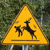 Deer Fearless, Bears Afraid, Pesticides Banned, Lyme Disease Promoted