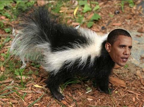 ObamaSkunk