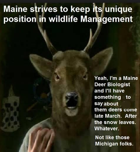 MaineDeerBiologist