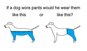 DogsWearPants