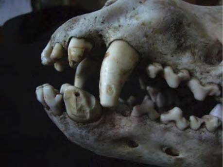 TeethDamage