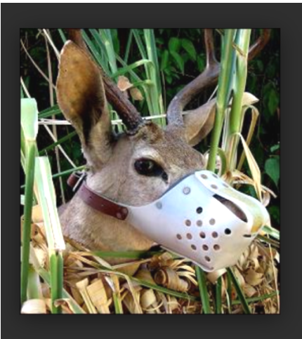 DeerMuzzled