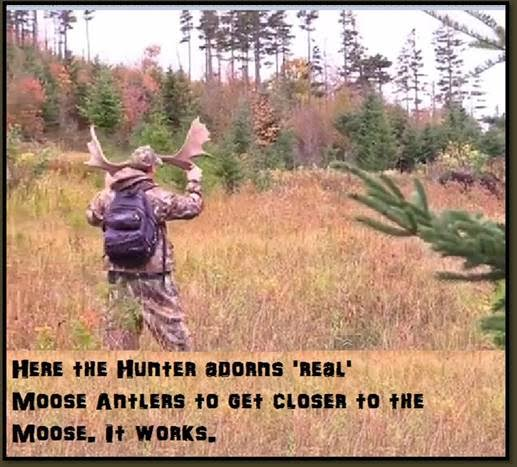 MooseHornHunterReal