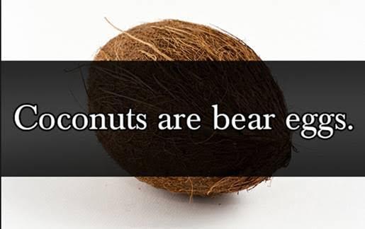 CoconutsBearEggs