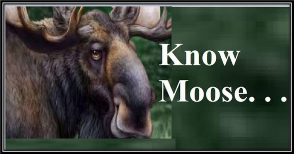 KnowMoose