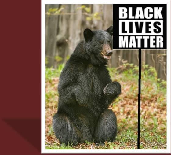 BlackBearLivesMatter