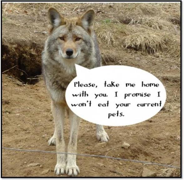 CoyoteTakeMeHome